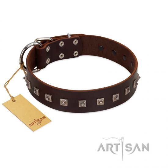 """Kingly Grace"" FDT Artisan Brown Leather Amstaff Collar with Silver-like Dotted Studs"