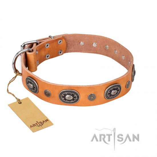 """Twinkle Twinkle"" FDT Artisan Incredible Studded Tan Leather Amstaff Collar"
