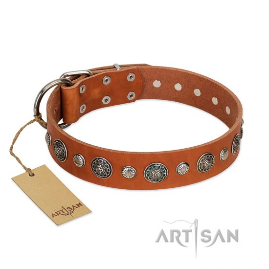 """Natural Beauty"" FDT Artisan Tan Leather Amstaff Collar with Shining Silver-like Studs"