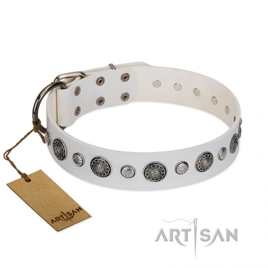 """Fluff-Stuff Beauty"" FDT Artisan White Leather Amstaff Collar with Silver-like Studs and Conchos"