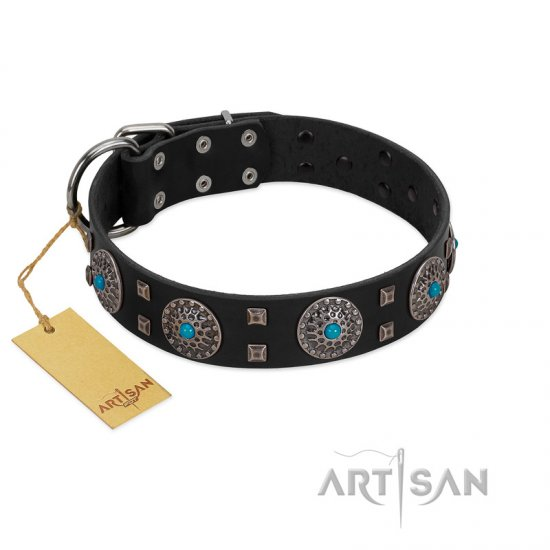 """Boundless Blue"" FDT Artisan Black Leather Amstaff Collar with Chrome Plated Brooches and Square Studs"