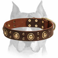 """Space-like"" Leather Amstaff Collar with Brass - Plated Decorations"