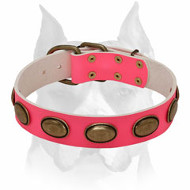 Amstaff Pink Leather Dog Collar with Gorgeous Oval Brass Plates