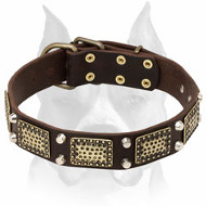 Amstaff Leather Dog Collar Decorated with Massive Brass Plates