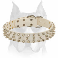 Amstaff White Leather Dog Collar with Spikes for Walking