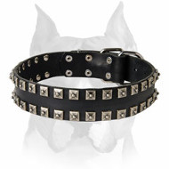 Amstaff Leather Dog Collar with Stylish Decorations