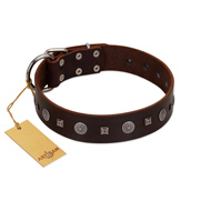 """Pure Sensation"" Exclusive FDT Artisan Brown Leather Amstaff Collar with Fancy Brooches and Studs"