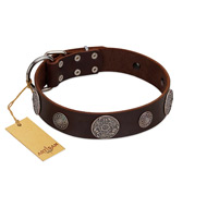 """Flashy Woof"" FDT Artisan Brown Leather Amstaff Collar with Chrome Plated Brooches"