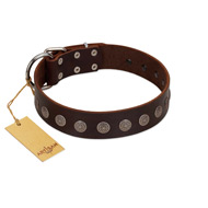 """Starry-Eyed"" Best Quality FDT Artisan Brown Designer Leather Amstaff Collar with Small Plates"