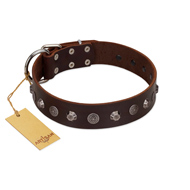 """Dark Chocolate"" Handmade FDT Artisan Brown Leather Amstaff Collar with Studs"