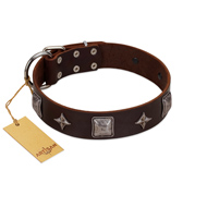 """Cold Star"" Designer FDT Artisan Brown Leather Amstaff Collar with Silver-Like Adornments"