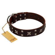 """Bigwig Woof"" FDT Artisan Brown Leather Amstaff Collar with Chrome Plated Stars and Square Studs"