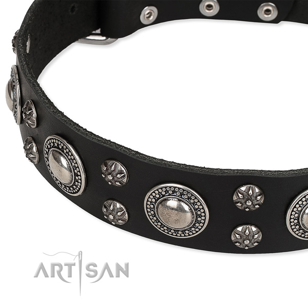 Daily walking embellished dog collar of strong genuine leather