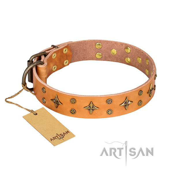 Stylish walking dog collar of top notch leather with decorations