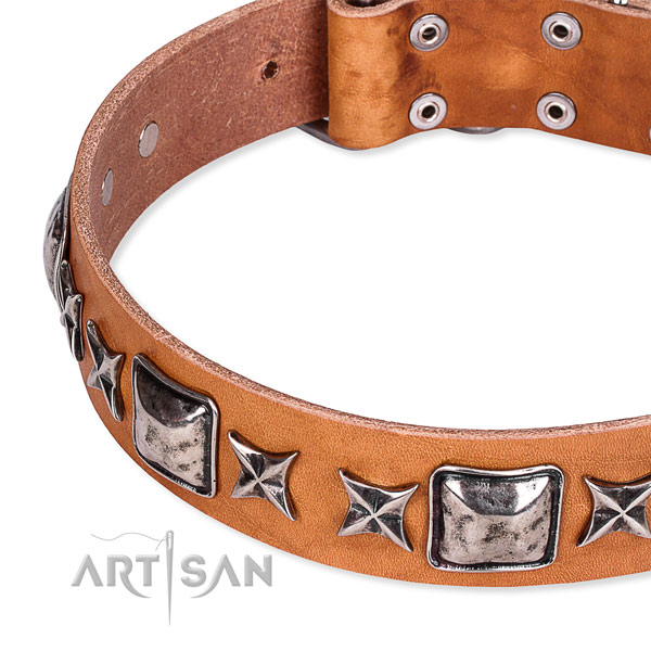 Fancy walking decorated dog collar of best quality full grain genuine leather