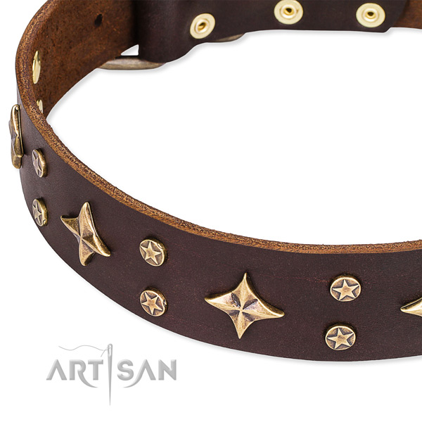 Everyday walking studded dog collar of fine quality full grain genuine leather