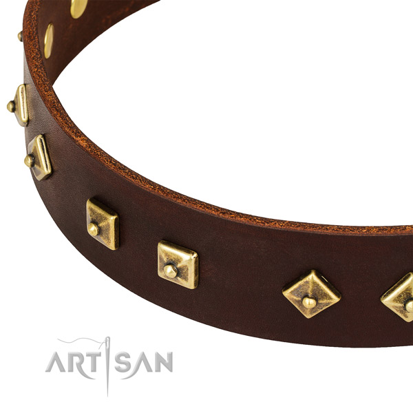 Extraordinary full grain leather collar for your handsome canine