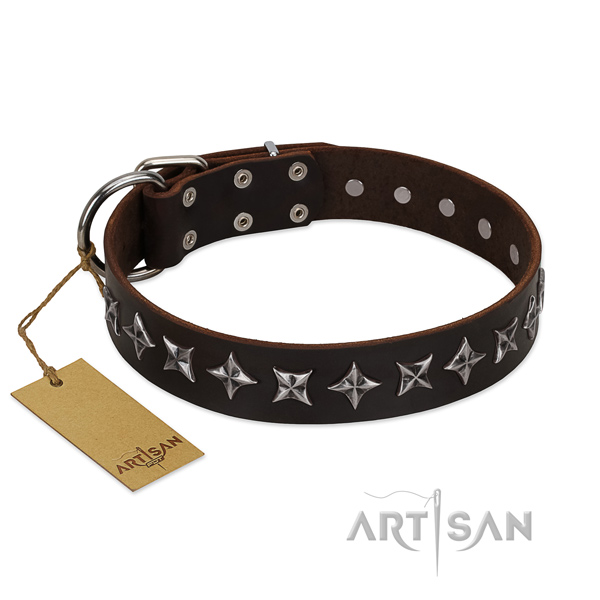 Walking dog collar of fine quality full grain genuine leather with studs