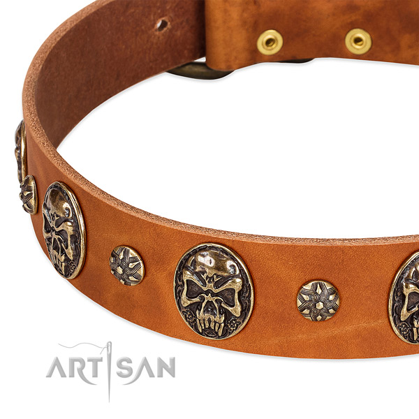 Rust resistant traditional buckle on full grain leather dog collar for your four-legged friend
