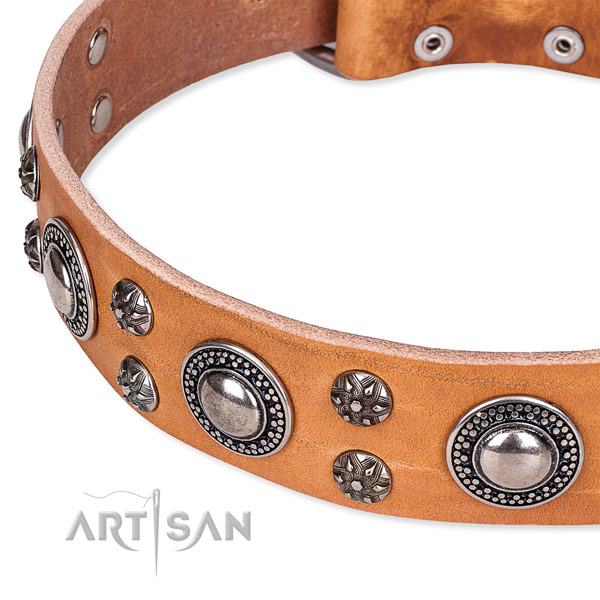 Basic training embellished dog collar of quality full grain leather