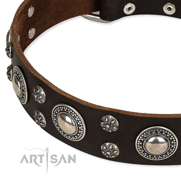 Basic training embellished dog collar of best quality full grain natural leather