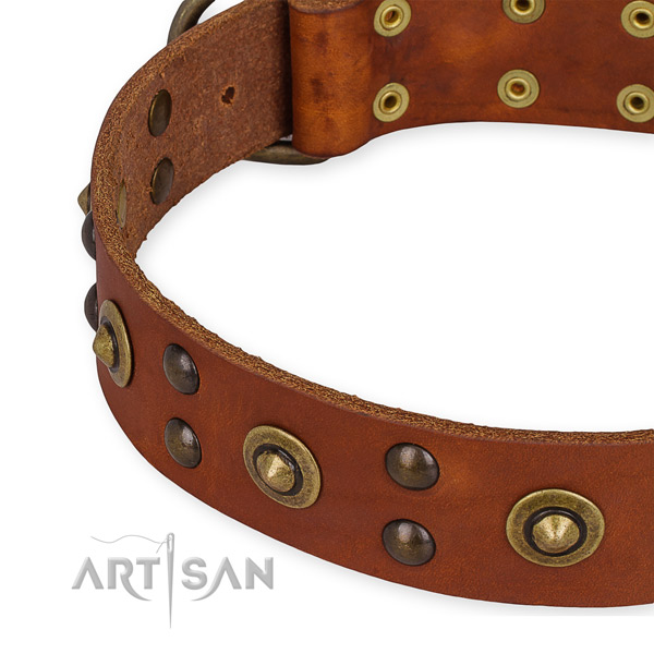Full grain leather collar with rust resistant hardware for your stylish pet