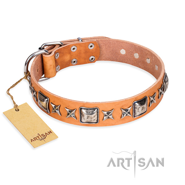 Everyday walking dog collar of finest quality genuine leather with decorations
