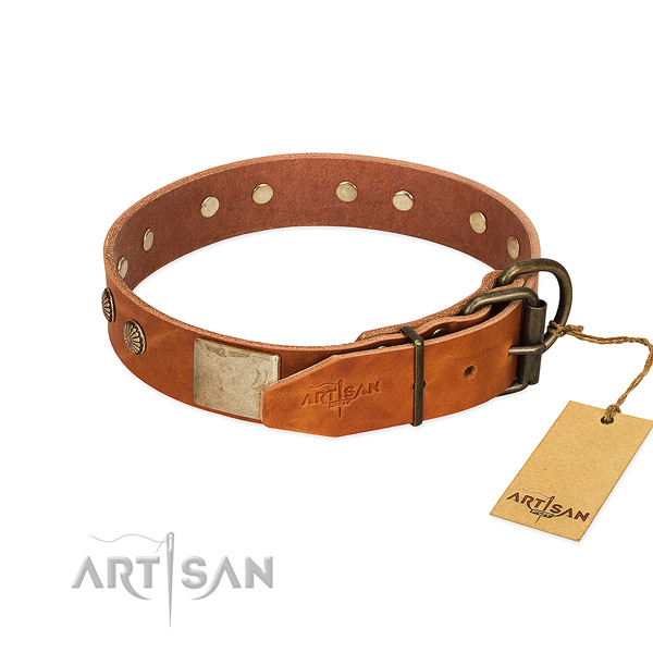 Strong adornments on everyday use dog collar