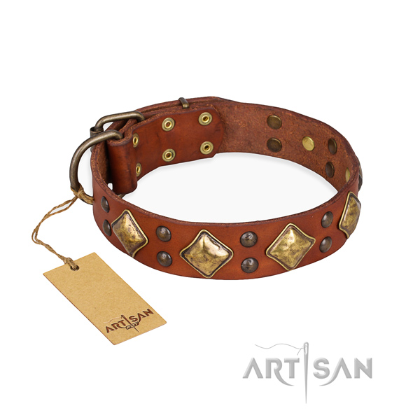 Walking exceptional dog collar with rust-proof D-ring