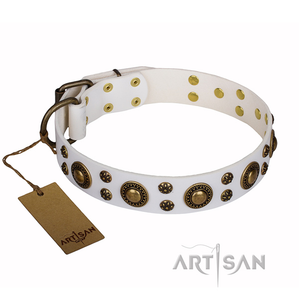 Walking dog collar of top quality full grain leather with embellishments