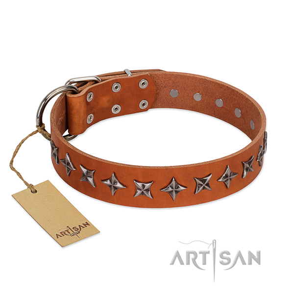 Everyday walking dog collar of best quality genuine leather with decorations