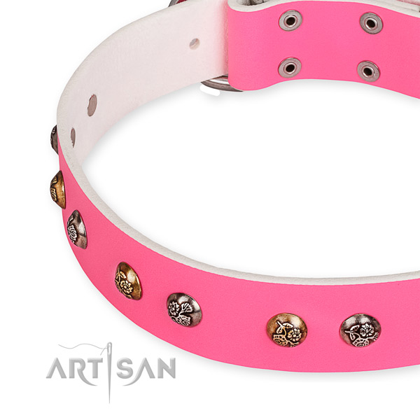 Full grain natural leather dog collar with awesome strong embellishments