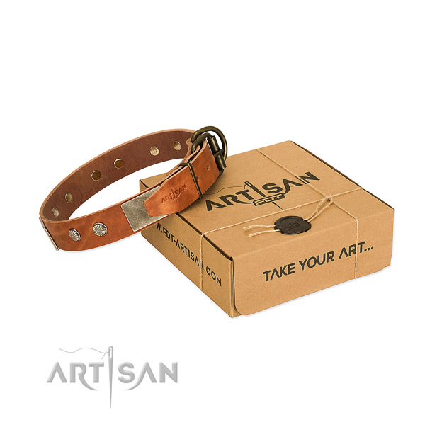 Reliable buckle on dog collar for everyday walking