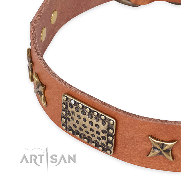 Leather collar with reliable fittings for your handsome pet