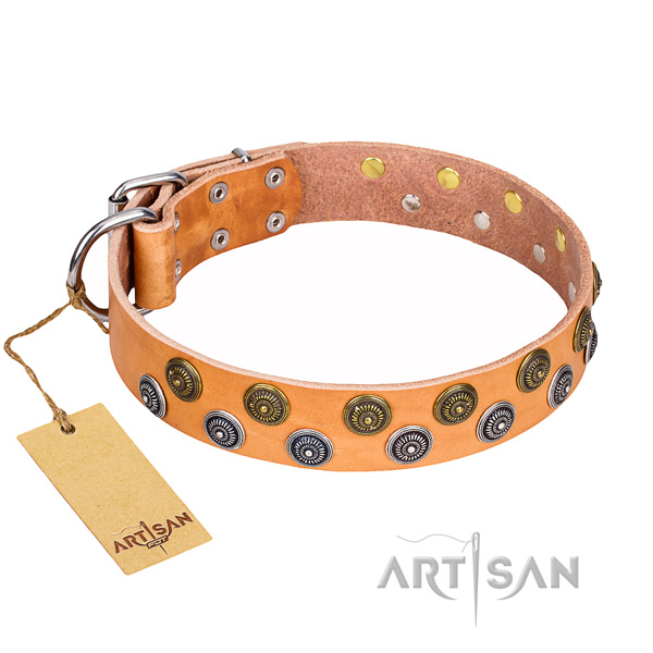 Daily use dog collar of high quality genuine leather with studs