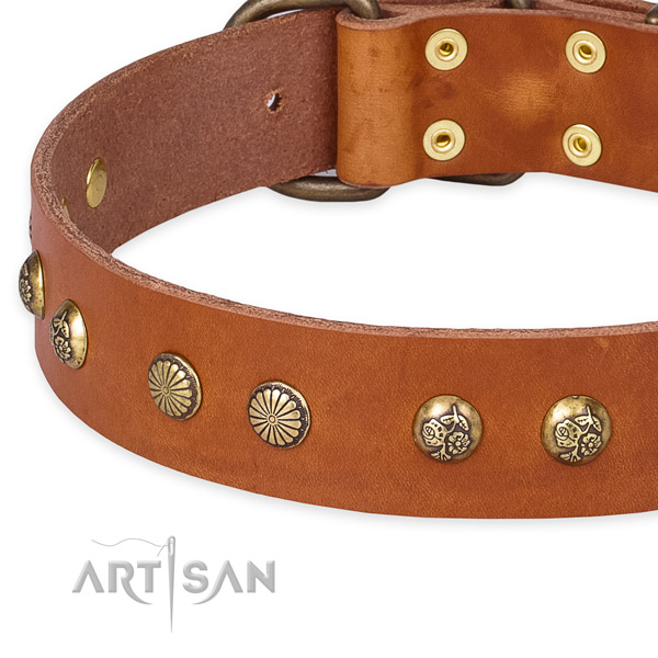 Full grain leather collar with corrosion proof fittings for your beautiful doggie