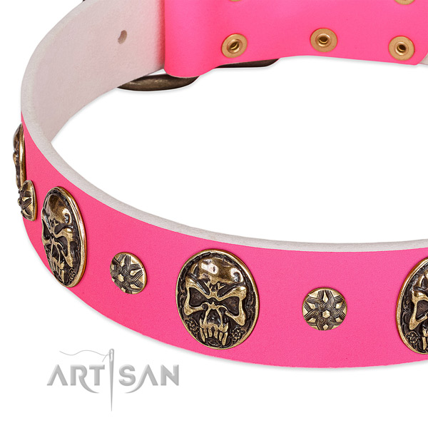 Stylish dog collar crafted for your beautiful pet