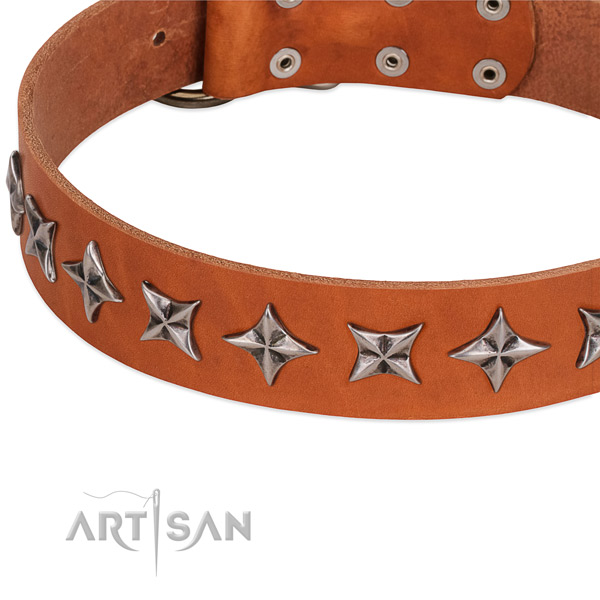 Walking embellished dog collar of high quality genuine leather