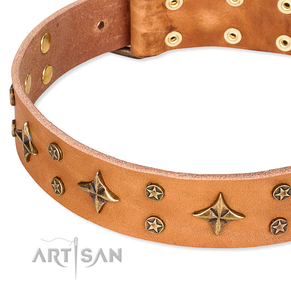 Basic training studded dog collar of reliable natural leather