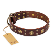 """Caprice of Fashion"" FDT Artisan Brown Leather Amstaff Collar with Round Decorations"
