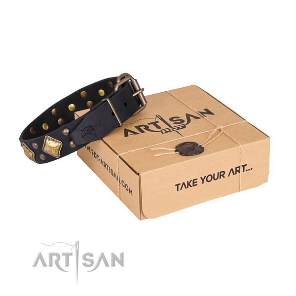Basic training dog collar with Exceptional durable embellishments