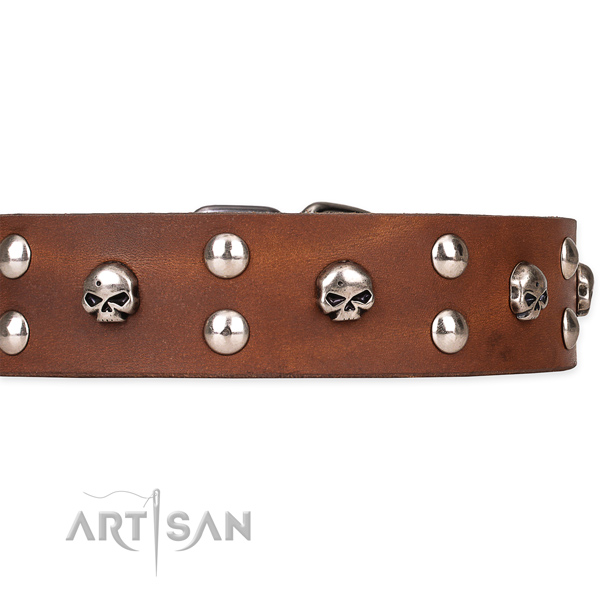 Basic training studded dog collar of fine quality genuine leather