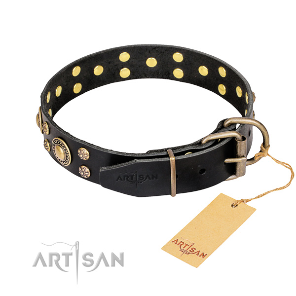 Everyday walking adorned dog collar of finest quality genuine leather