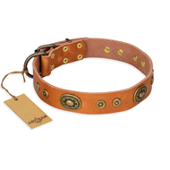 """Dandy Pet"" FDT Artisan Handcrafted Tan Leather Amstaff Collar"