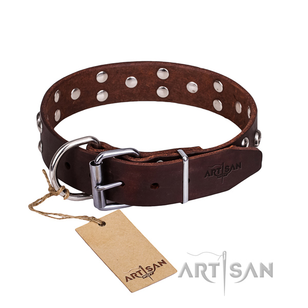 Daily walking dog collar of top quality full grain natural leather with studs