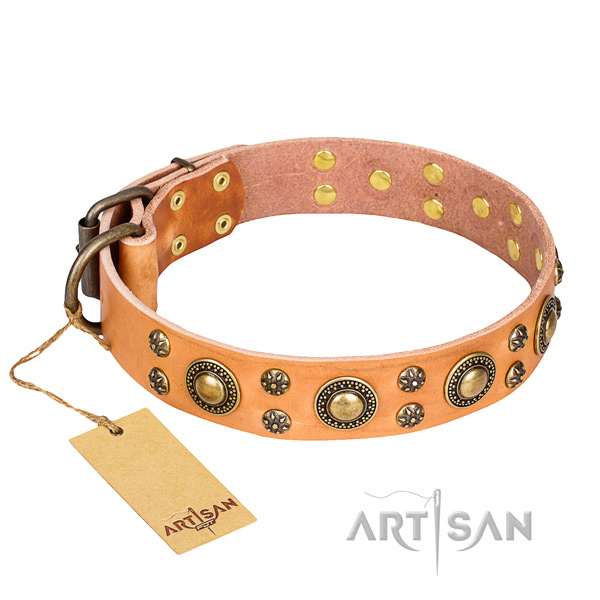 Stylish walking dog collar of quality full grain genuine leather with embellishments