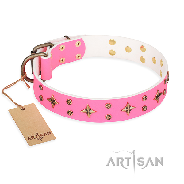 Daily walking dog collar of top quality full grain leather with embellishments