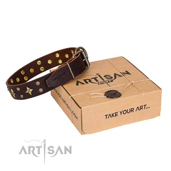 Walking dog collar of high quality full grain genuine leather with adornments
