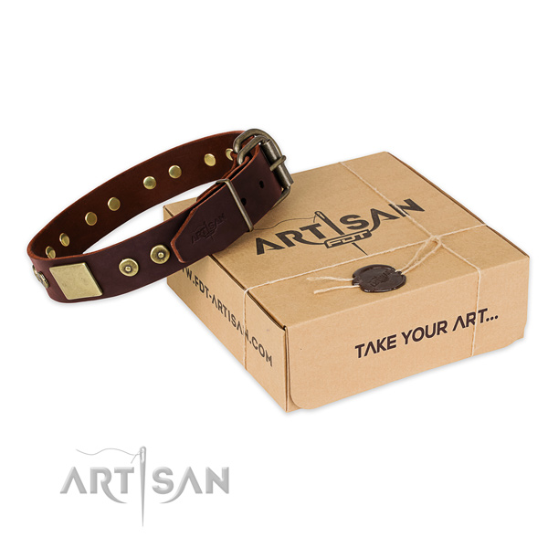 Reliable traditional buckle on dog collar for everyday walking