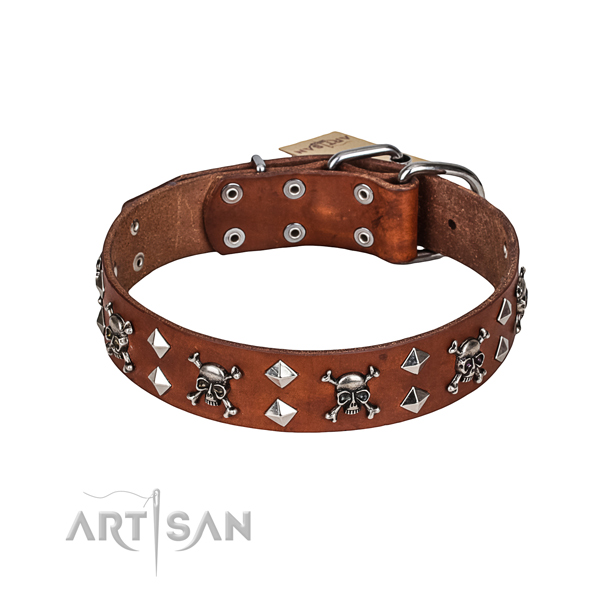 Stylish walking dog collar of finest quality full grain genuine leather with studs